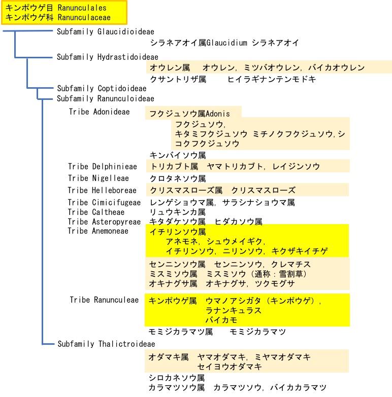 f:id:yachikusakusaki:20190402172134j:plain