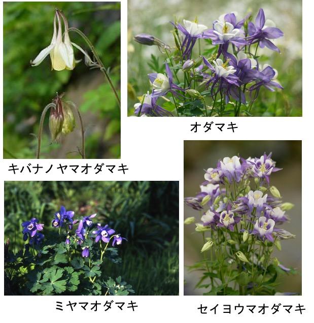 f:id:yachikusakusaki:20190402182522j:plain