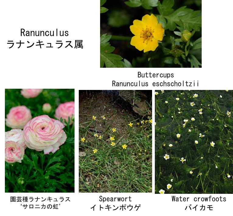 f:id:yachikusakusaki:20190402184402j:plain