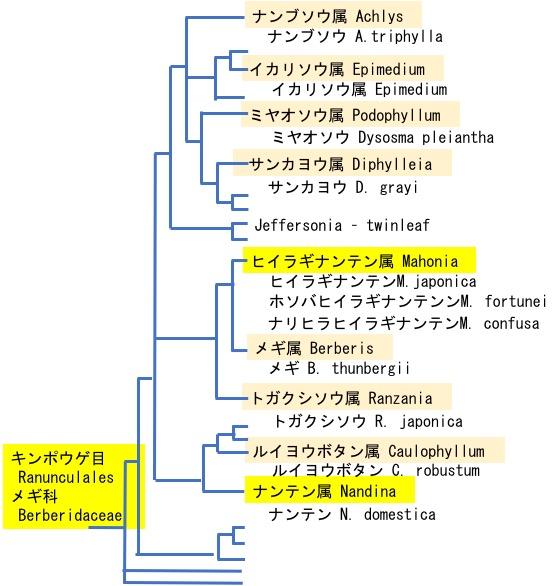 f:id:yachikusakusaki:20190405155453j:plain