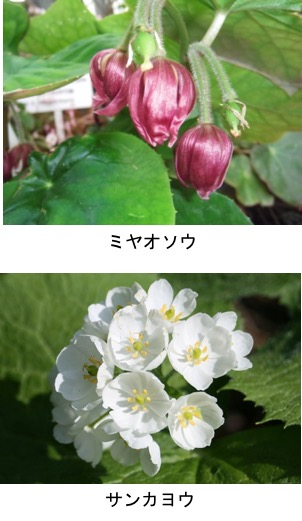 f:id:yachikusakusaki:20190405161635j:plain