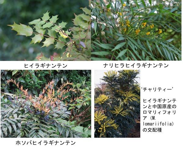 f:id:yachikusakusaki:20190405161652j:plain