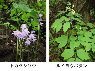 f:id:yachikusakusaki:20190405161723j:plain