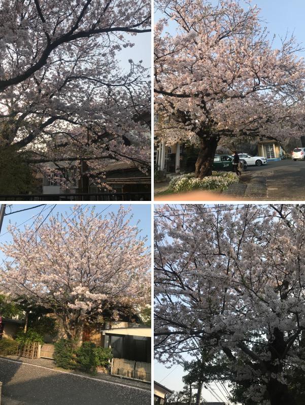 f:id:yachikusakusaki:20190408003256j:plain