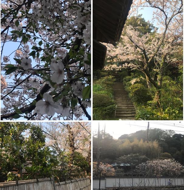 f:id:yachikusakusaki:20190408003415j:plain