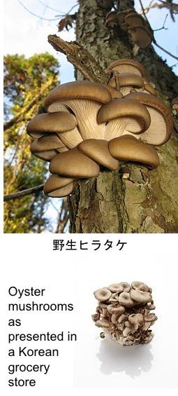 f:id:yachikusakusaki:20190426020815j:plain