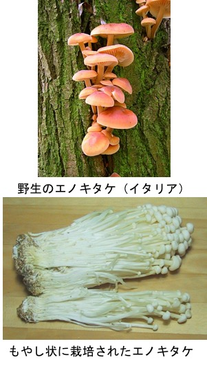 f:id:yachikusakusaki:20190426021213j:plain