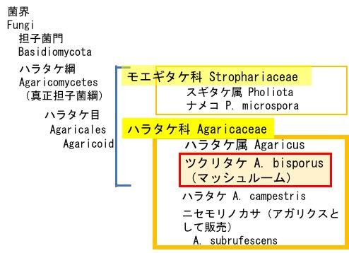 f:id:yachikusakusaki:20190426121928j:plain