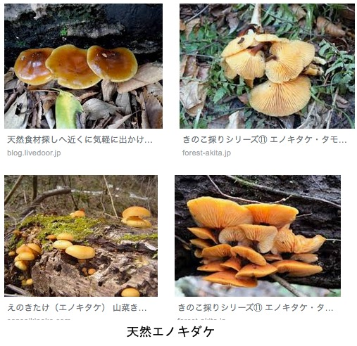 f:id:yachikusakusaki:20190427010512j:plain