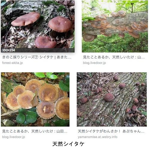 f:id:yachikusakusaki:20190427010541j:plain