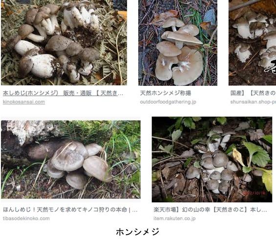 f:id:yachikusakusaki:20190427010610j:plain