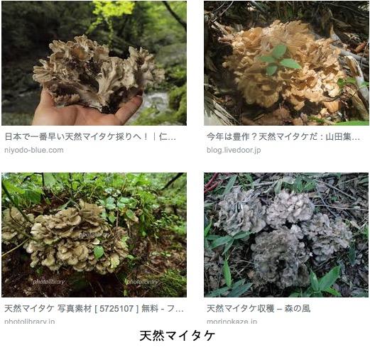 f:id:yachikusakusaki:20190427010641j:plain