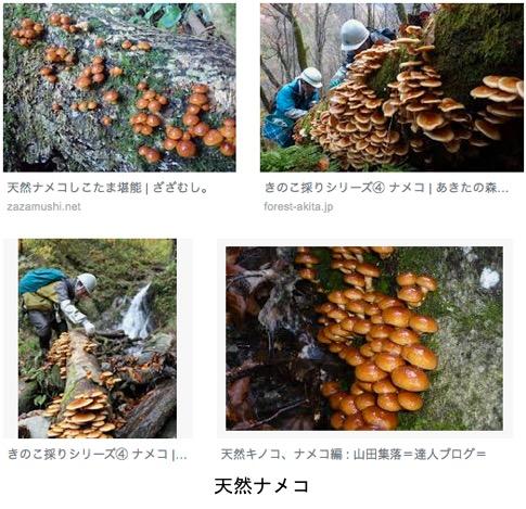 f:id:yachikusakusaki:20190427010703j:plain