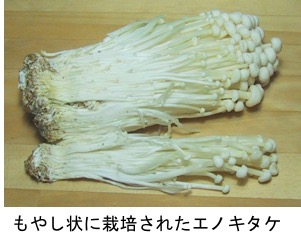 f:id:yachikusakusaki:20190427114159j:plain