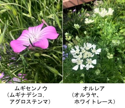 f:id:yachikusakusaki:20190503223332j:plain