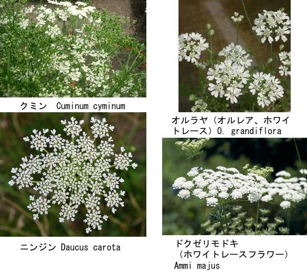 f:id:yachikusakusaki:20190503224112j:plain