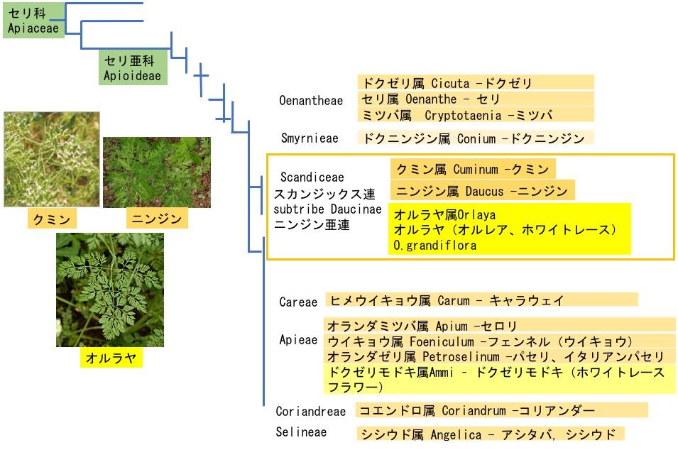 f:id:yachikusakusaki:20190503224129j:plain