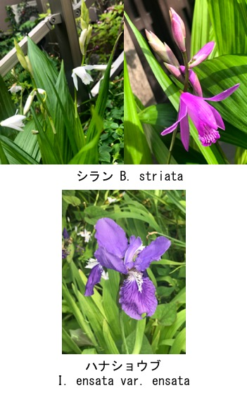 f:id:yachikusakusaki:20190503224323j:plain