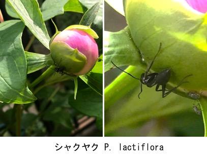 f:id:yachikusakusaki:20190503224340j:plain