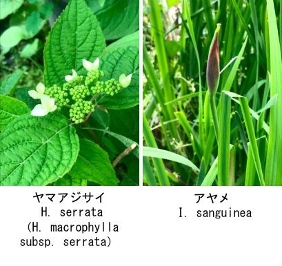 f:id:yachikusakusaki:20190503224408j:plain