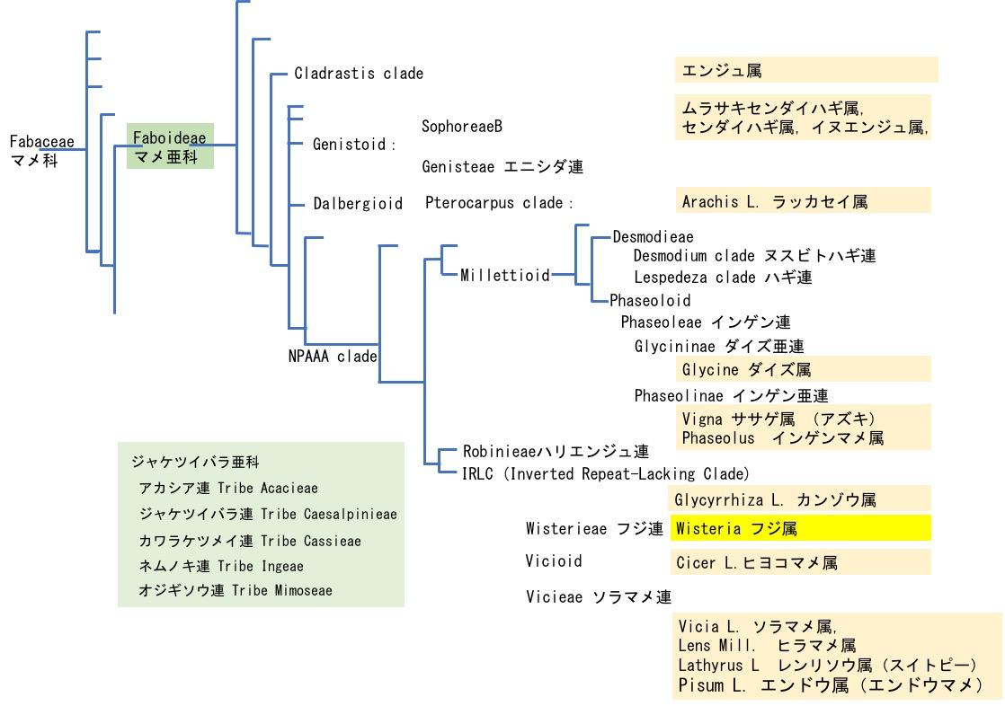 f:id:yachikusakusaki:20190505140316j:plain