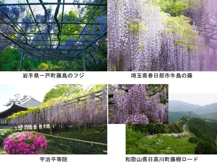 f:id:yachikusakusaki:20190505164213j:plain