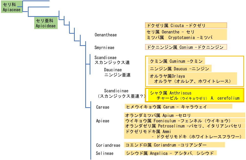 f:id:yachikusakusaki:20190516003809j:plain
