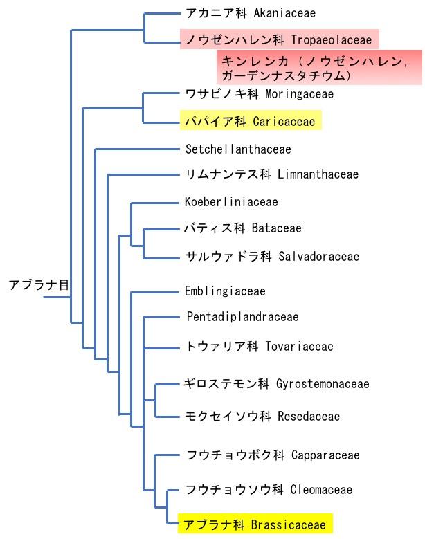 f:id:yachikusakusaki:20190517023714j:plain