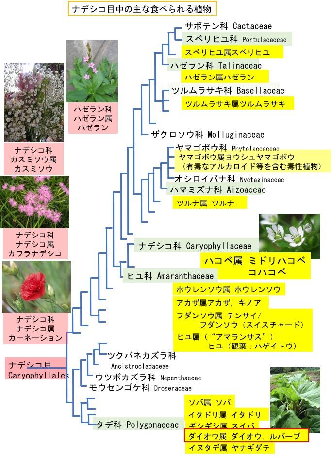 f:id:yachikusakusaki:20190520004730j:plain