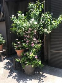 f:id:yachikusakusaki:20190524004329j:plain