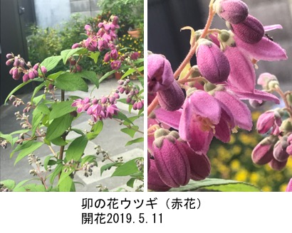 f:id:yachikusakusaki:20190524004425j:plain