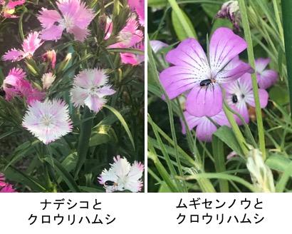 f:id:yachikusakusaki:20190525012345j:plain