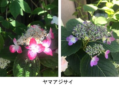 f:id:yachikusakusaki:20190526024516j:plain