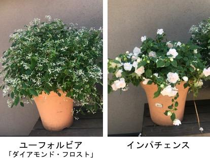 f:id:yachikusakusaki:20190526024619j:plain
