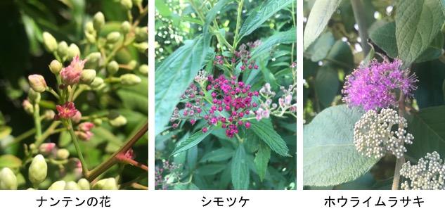 f:id:yachikusakusaki:20190526024644j:plain