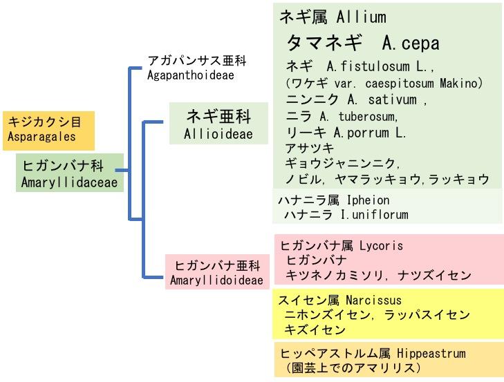 f:id:yachikusakusaki:20190604015221j:plain