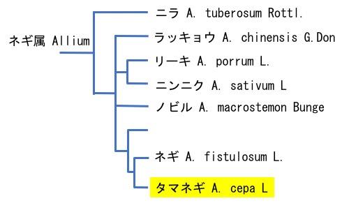 f:id:yachikusakusaki:20190604015659j:plain