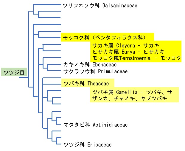 f:id:yachikusakusaki:20190608010020j:plain