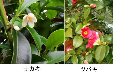 f:id:yachikusakusaki:20190608010706j:plain