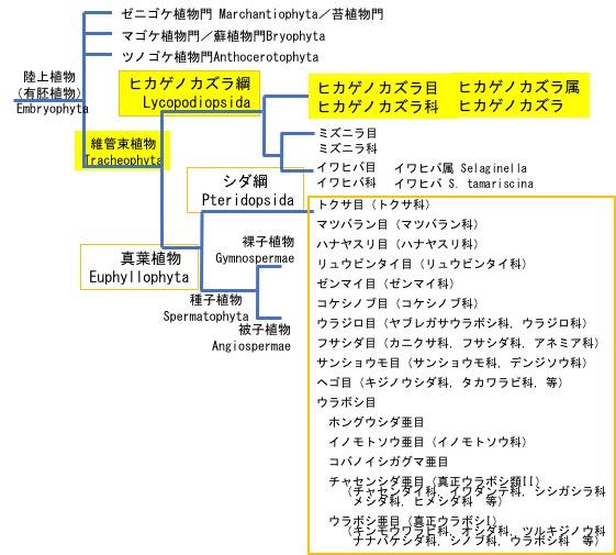 f:id:yachikusakusaki:20190610025203j:plain