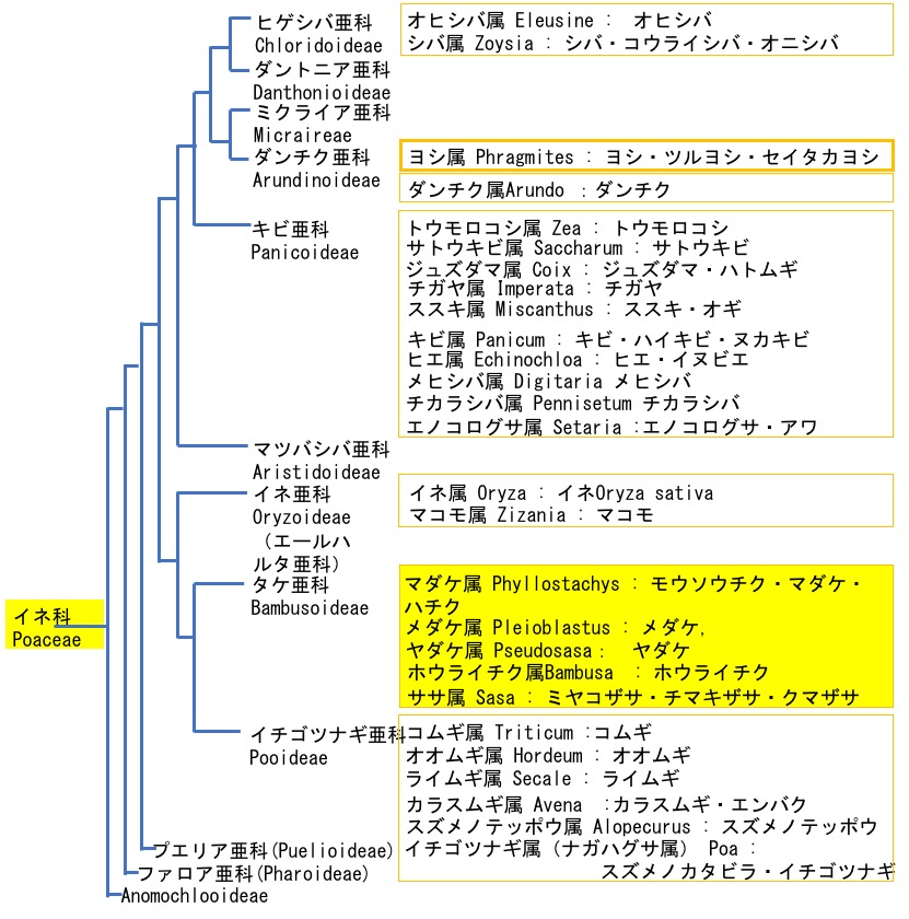 f:id:yachikusakusaki:20190612162943j:plain