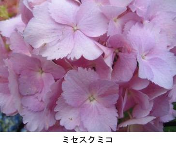 f:id:yachikusakusaki:20190614221217j:plain