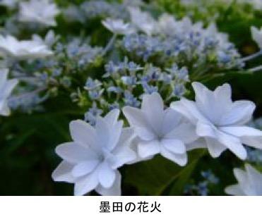 f:id:yachikusakusaki:20190614221331j:plain
