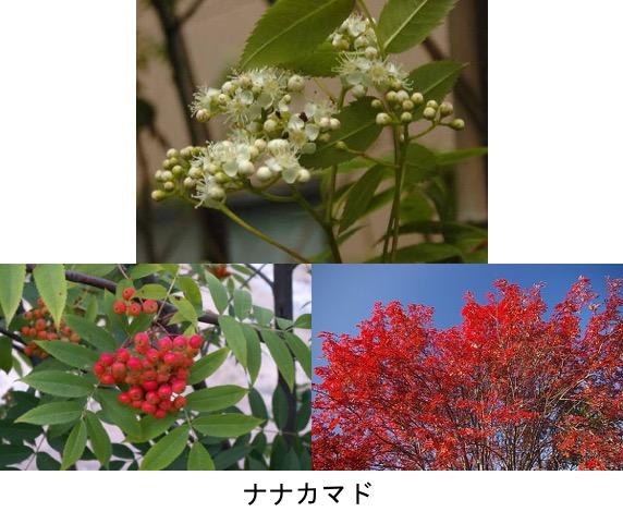 f:id:yachikusakusaki:20190614224525j:plain
