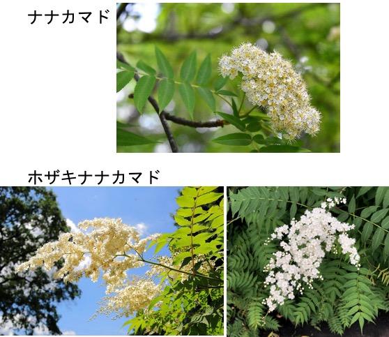 f:id:yachikusakusaki:20190614224744j:plain