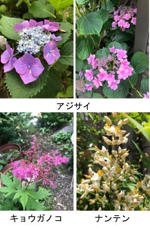f:id:yachikusakusaki:20190615233104j:plain
