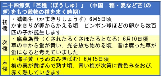f:id:yachikusakusaki:20190615233519j:plain