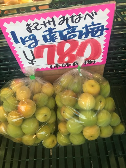 f:id:yachikusakusaki:20190616222446j:plain
