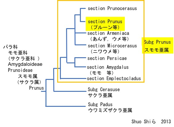 f:id:yachikusakusaki:20190618211532j:plain