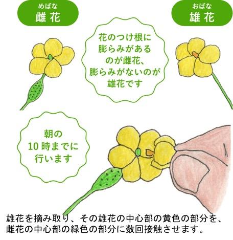 f:id:yachikusakusaki:20190619013245j:plain